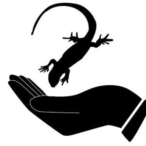ognennaya-salamandra-i-chelovek