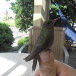 samaya malenkaya ptica v mire