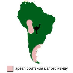 areal-nandu