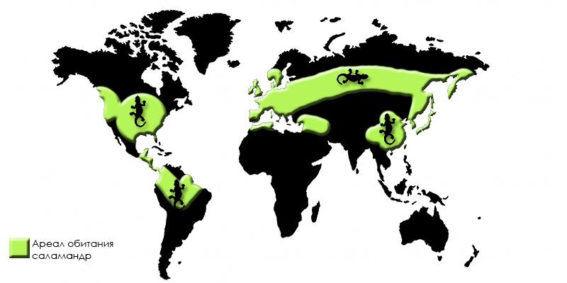 map-salamander