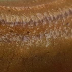 koja-salamandri