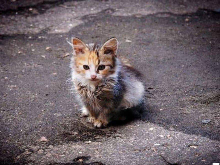 Здесь изображен бродячий котенок