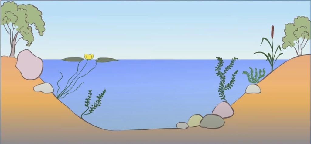 Экологическая сукцессия фото