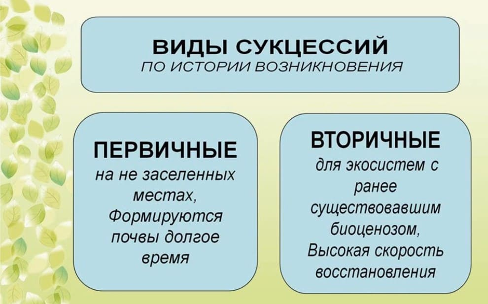 Экологическая сукцессия таблица, схема